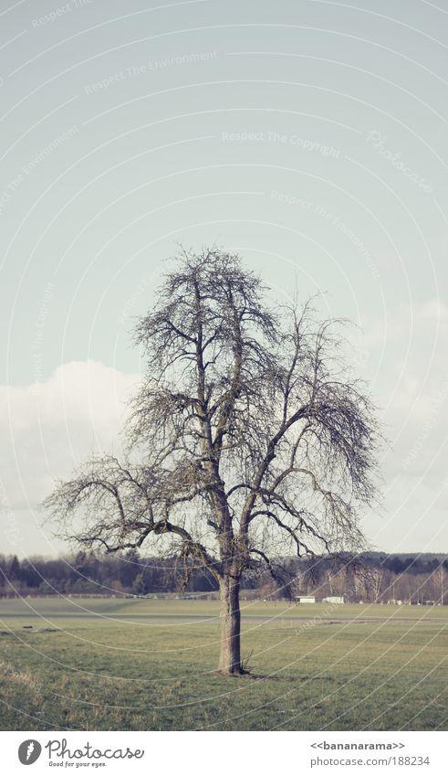 Nature Tree Loneliness Winter Calm Landscape Meadow Cold Garden Park Power Field Elegant Arrangement Authentic Clean