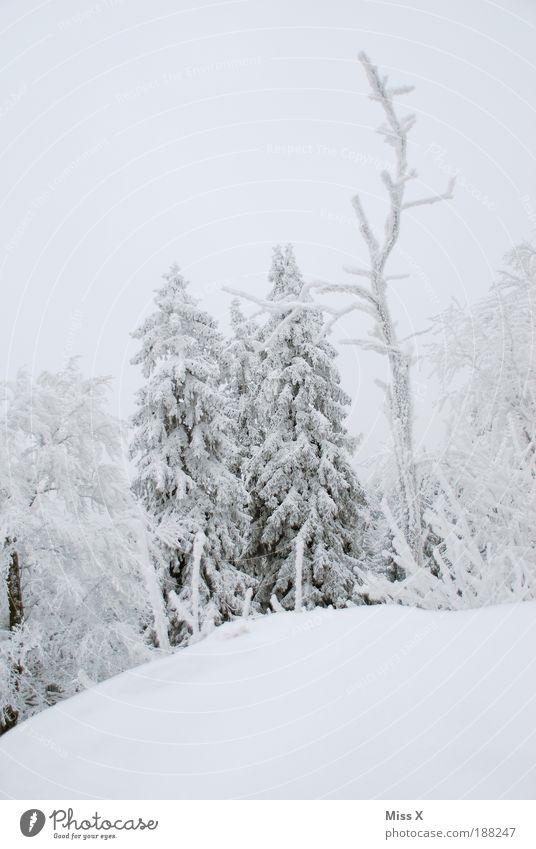Nature White Winter Loneliness Forest Cold Snow Environment Mountain Weather Ice Rock Climate Frost Branch Christmas tree