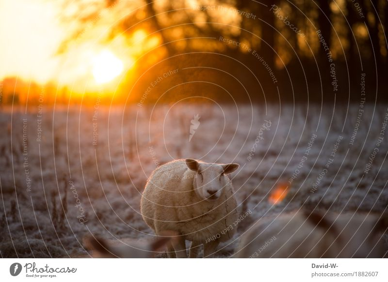 early and frosty Environment Nature Landscape Air Sun Sunrise Sunset Sunlight Autumn Winter Climate Weather Beautiful weather Ice Frost Snow Meadow Field Animal