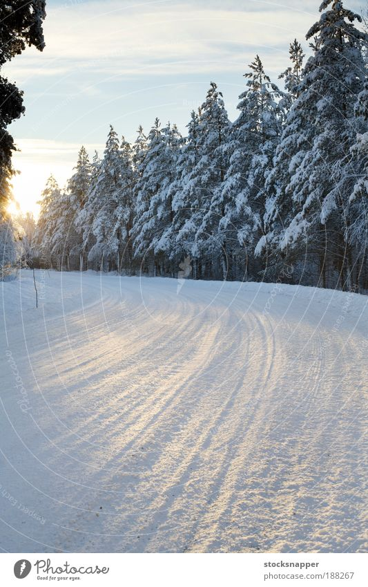 Winter road Plowed Curve Nordic Scandinavia Finnish Finland Cold Sunlight Tree Forest Street Snow The Arctic