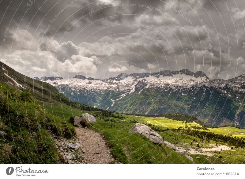 Thunderstorm Mountain Hiking Landscape Plant Storm clouds Summer Climate change Bad weather Snow Grass Alps Snowcapped peak Alpine pasture Lanes & trails