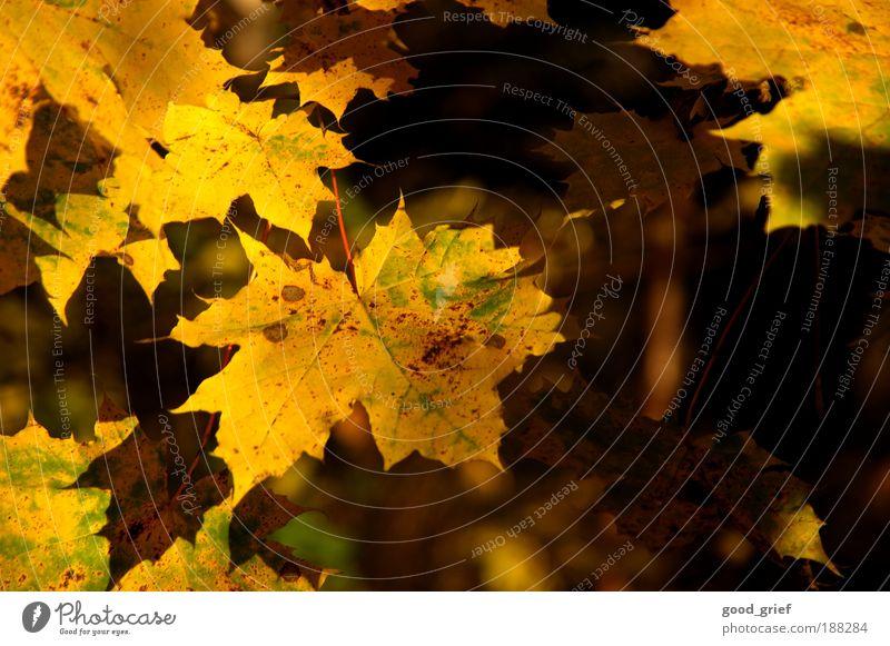 Nature Green Tree Plant Sun Summer Leaf Environment Landscape Yellow Autumn Park Gold Illuminate To enjoy Virgin forest