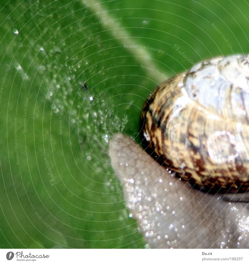 for waldmeister... Animal Snail Fat Contentment House (Residential Structure) House building Moving (to change residence) Mucus Slimy Trail of mucus Crawl