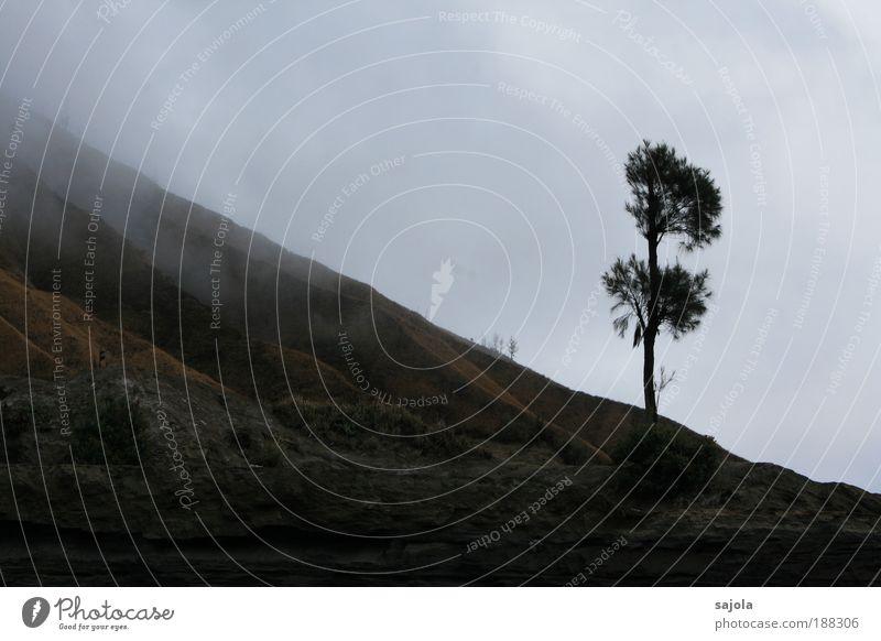 Nature Sky Tree Plant Vacation & Travel Dark Sadness Landscape Fog Environment Earth Gloomy Asia Colour Volcano Bad weather