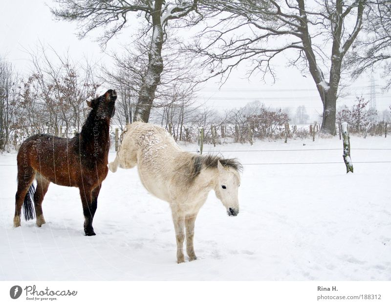 White Loneliness Animal Winter Cold Emotions Brown Leisure and hobbies Human being Hair and hairstyles Uniqueness Horse Passion Argument Stress Freeze