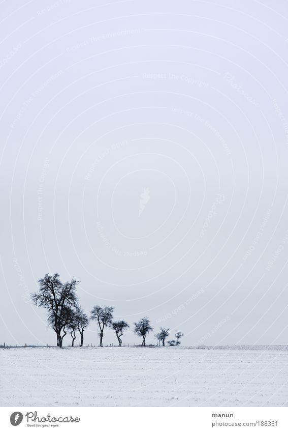 Nature Sky White Tree Blue Winter Calm Loneliness Cold Snow Relaxation Sadness Landscape Ice Field Environment