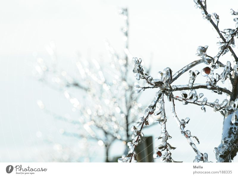 Nature Beautiful Tree Plant Winter Cold Park Ice Bright Glittering Glass Weather Environment Frost Climate Pure