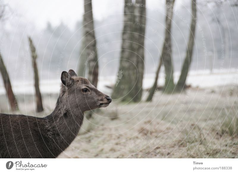 Nature Tree Winter Animal Forest Meadow Pelt Wild animal Timidity Roe deer Clearing