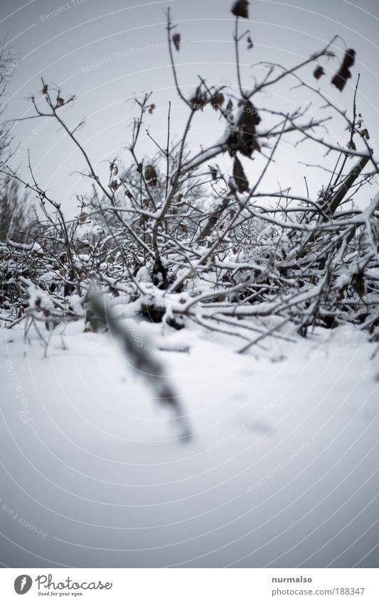 Nature Plant Landscape Calm Winter Cold Environment Snow Art Garden Lie Wild Ice Fear Bushes Climate