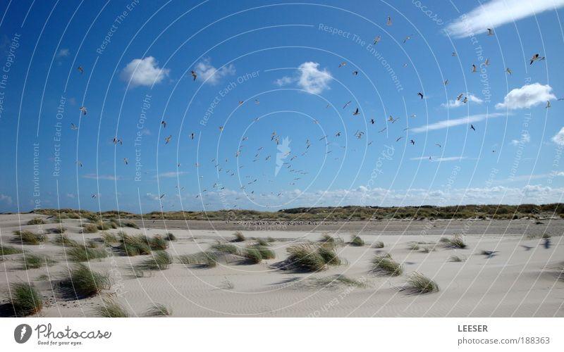 Nature Sky Ocean Plant Summer Beach Clouds Grass Warmth Sand Landscape Air Bird Coast Wind Colour