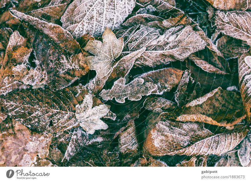 beginning of winter Environment Nature Landscape Autumn Winter Weather Beautiful weather Bad weather Ice Frost Leaf Garden Park Fresh Cold Brown Multicoloured