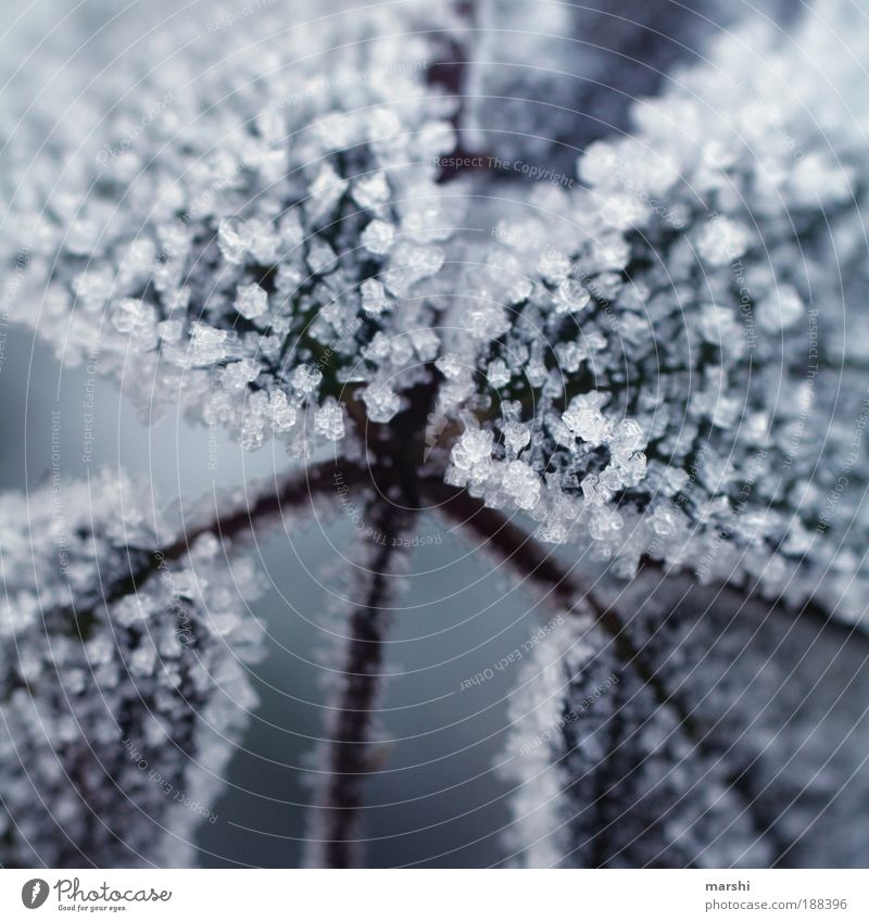 Plant Winter Leaf Cold Ice Weather Sweet Frost Crystal Ice crystal Minerals