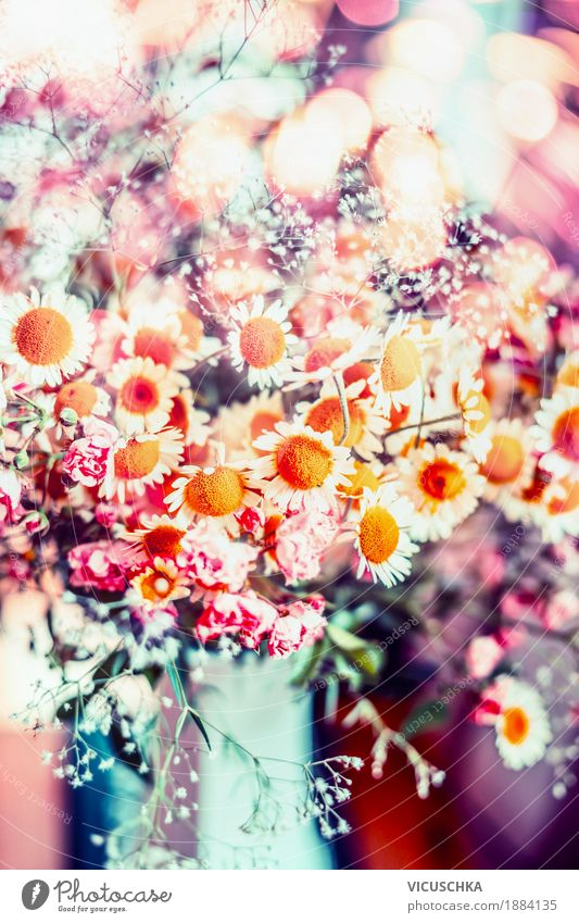 Beautiful summer flowers Style Design Summer Decoration Nature Plant Spring Flower Leaf Blossom Wild plant Garden Bouquet Blossoming Love Pink Multicoloured