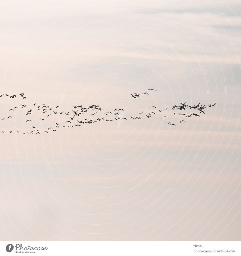 Sky Nature Clouds Life Lanes & trails Movement Bird Flying Together Arrangement Communicate Tall Group of animals Attachment Tradition Concentrate