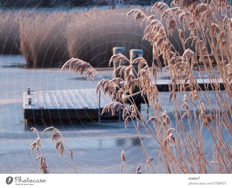 frost walkway Lakeside Calm Stagnating Solidify Frost Ice Footbridge Jetty Common Reed Exterior shot Deserted Dawn Day