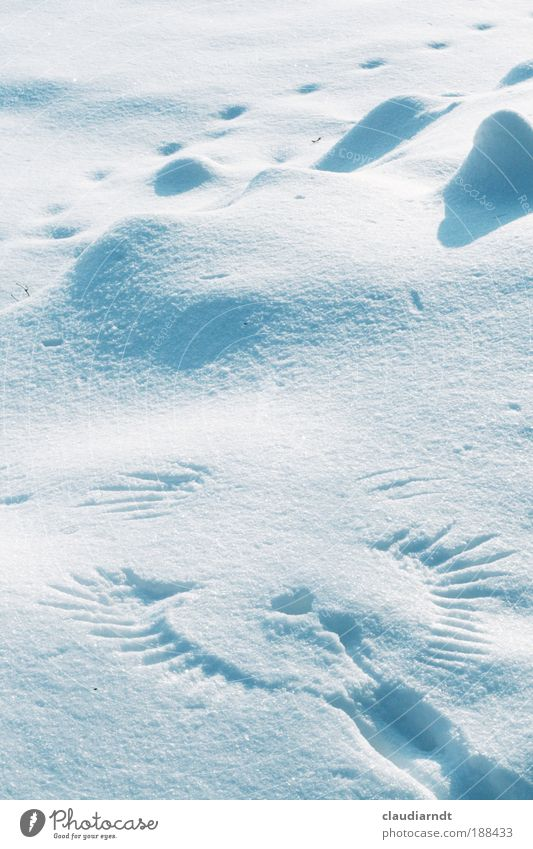 angels Sculpture Nature Winter Weather Ice Frost Snow Animal tracks Angel Discover Flying Esthetic Exceptional Elegant Cold Beautiful White Happy Power Brave