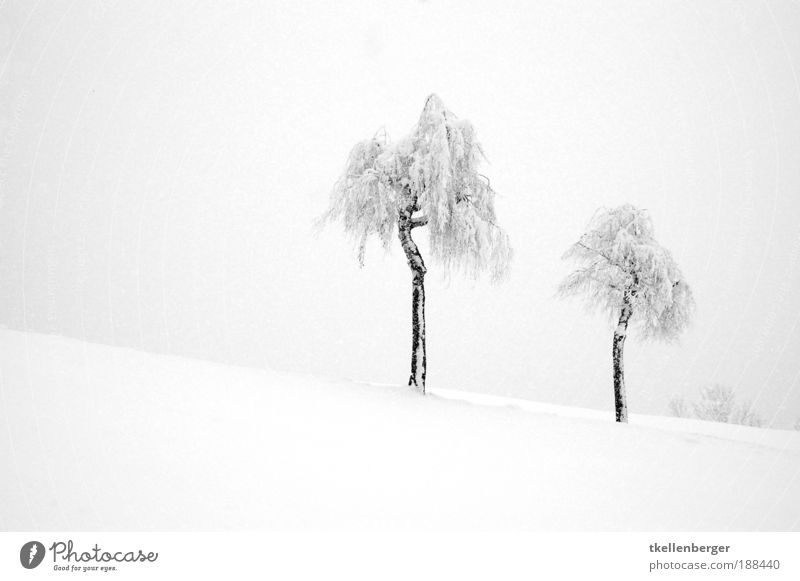 Winter dream in white Nature Landscape Plant Water Clouds Ice Frost Snow Tree Birch tree Hill Dark Fresh Gray Black White Moody Agreed Loneliness Uniqueness