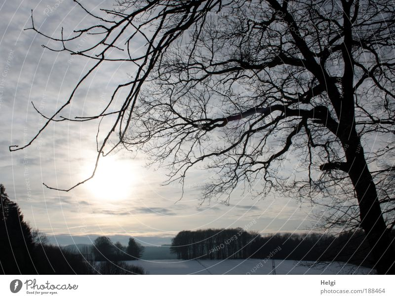 Nature Beautiful Sky White Tree Sun Blue Plant Winter Black Clouds Forest Cold Snow Relaxation Landscape