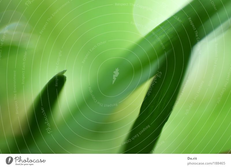 Nature Green Plant Joy Leaf Grass Spring Dream Contentment Environment Fresh Hope Delicate Blossoming Juicy Spring fever