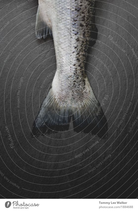 Fish tail on stone cut board in dark mutted dull tones Eating Skin Life Christmas & Advent Animal River Sail Stone Dirty Dark Black Death fish background head