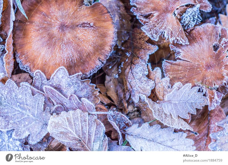frost foliage Environment Nature Landscape Plant Animal Autumn Winter Climate Weather Ice Frost Leaf Mushroom Forest Woodground Deserted Exceptional Fresh