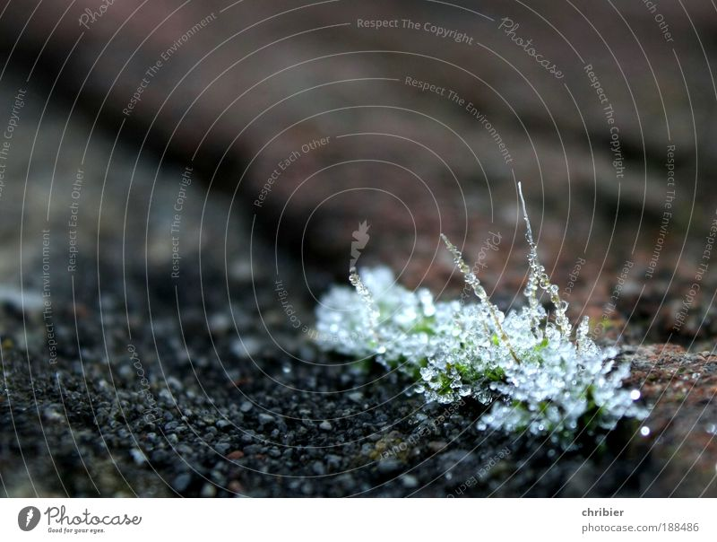 threaded Drops of water Winter Climate Ice Frost Moss Freeze Glittering Cold Point Calm Endurance Grief Stagnating Transience Delicate Motionless Hoar frost