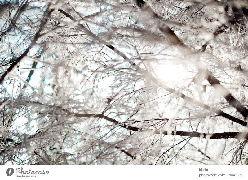 cold hours Nature Animal Drops of water Sun Sunlight Winter Ice Frost Forest Emotions Moody Joy Happy Contentment Colour photo Exterior shot Deserted