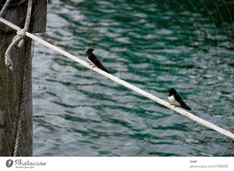 Nature Water Summer Animal Bird Coast Pair of animals Sit Island Wing Bay Baltic Sea Crouch Skipping