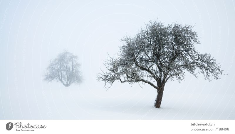 Two trees in the snow Harmonious Relaxation Calm Winter Snow Winter vacation Nature Landscape Fog Tree Meadow White Snowscape Snow layer Colour photo
