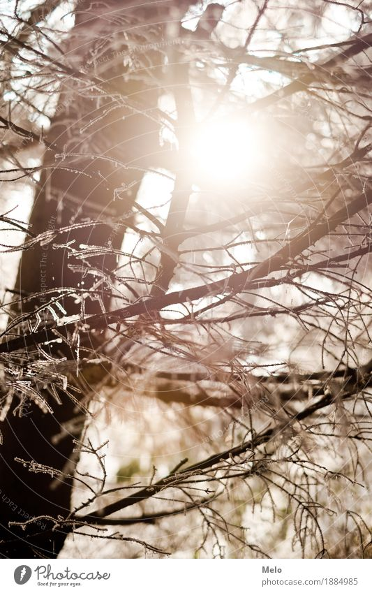 frosty morning Nature Animal Air Sun Winter Tree Forest Positive Beautiful Strong Yellow Gold Orange Moody Happy Colour photo Exterior shot Deserted