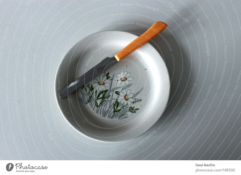 meal Crockery Plate Cutlery Knives Table Plant Flower Blossom Daisy Copy Space left Copy Space right Neutral Background Isolated Image Bright background