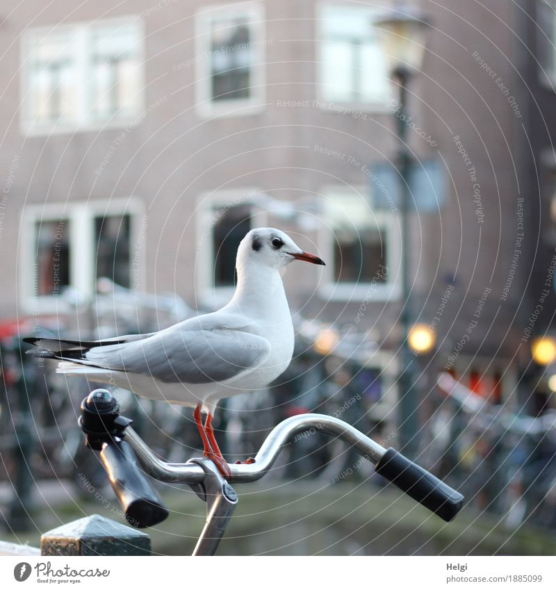 lift Environment Winter Beautiful weather Amsterdam Downtown House (Residential Structure) Facade Window Vehicle Bicycle Animal Bird Seagull 1 Observe