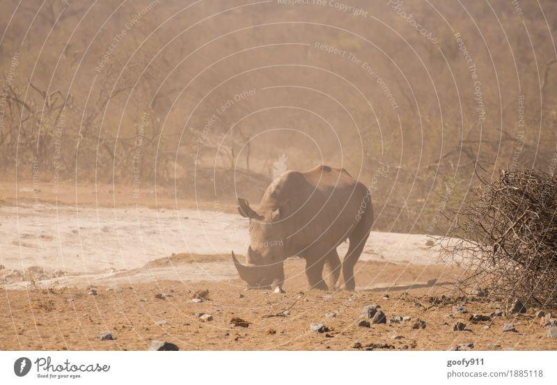 Rhino 2 Vacation & Travel Trip Adventure Far-off places Safari Summer Sun Environment Nature Landscape Earth Sand Warmth Drought Bushes Desert Animal