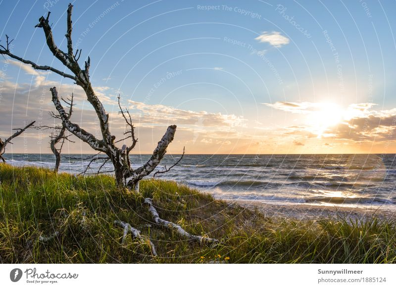 Sunset at the Baltic Sea Environment Nature Landscape Plant Water Sunlight Summer Wind Waves Coast Beach Ocean Observe Love Vacation & Travel Esthetic Authentic