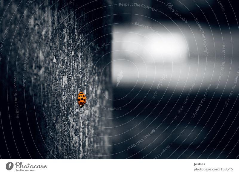 SheBug Animal Serene Ladybird Beetle Isolated (Position)