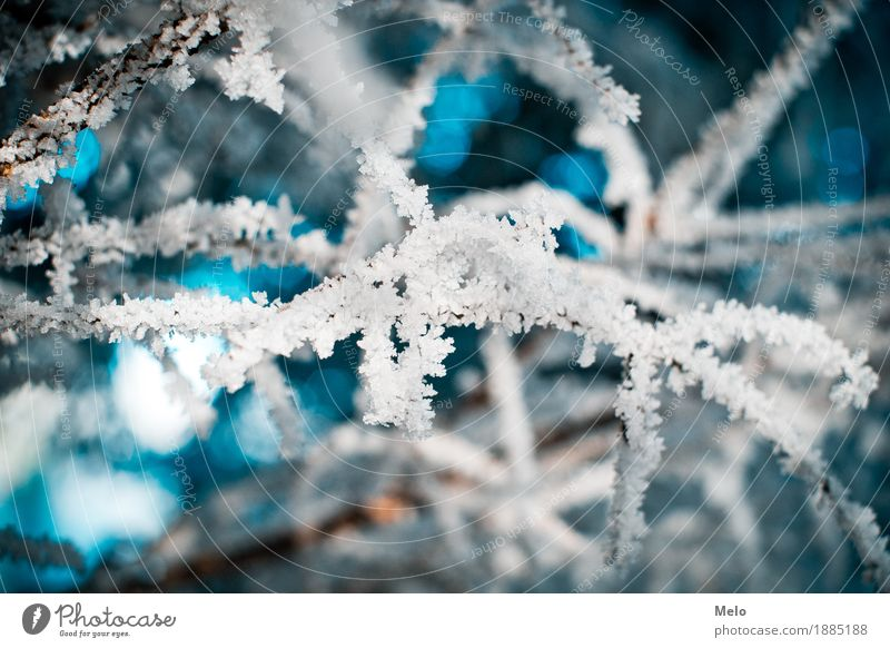 frost Nature Plant Animal Air Water Drops of water Winter Foliage plant Forest Fresh Cold Blue Turquoise Loneliness Colour photo Exterior shot Close-up