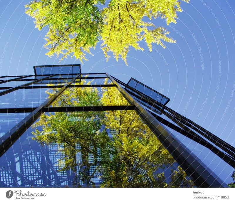 phase2 Reflection Tree Planning Architecture Glass Sky Phenomenon