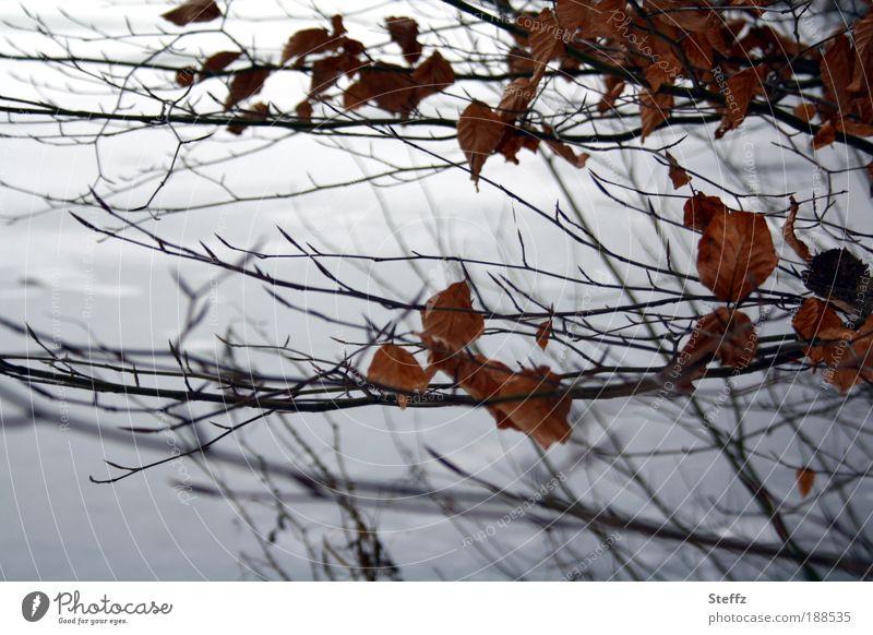 December Grey december grey Winter light twigs December light gray color Environment Nature Ice Frost natural Winter's day winter Snow Winter mood Plant bushes