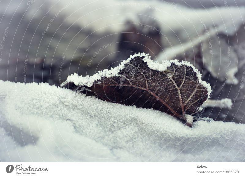 winter autumn Nature Plant Ice Frost Snow Leaf Garden Lie Exterior shot