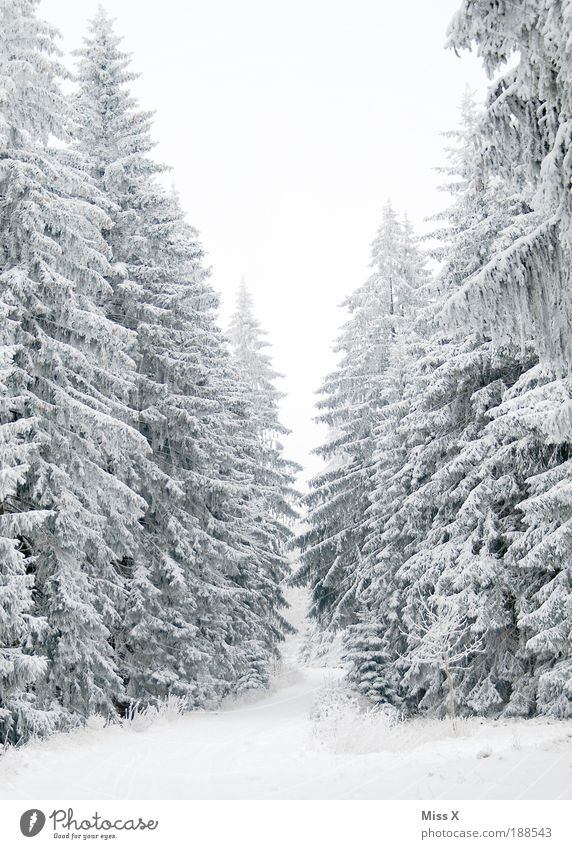 Nature White Tree Plant Vacation & Travel Winter Forest Cold Snow Environment Weather Ice Trip Fog Large Frost