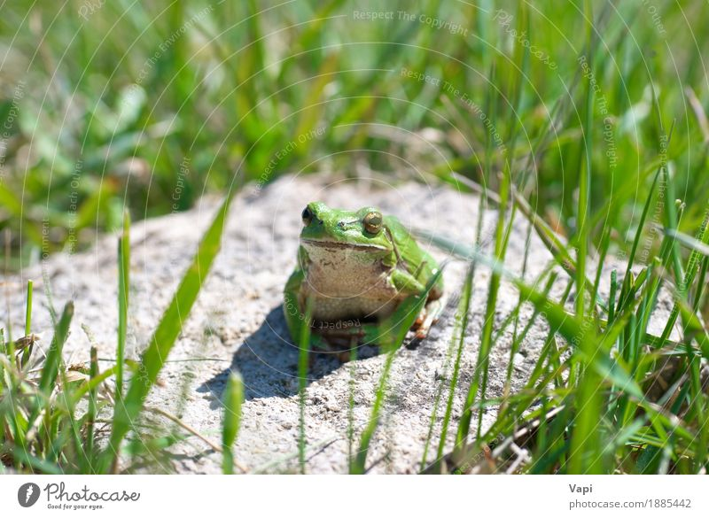 Green frog with grass Nature Summer Colour White Landscape Loneliness Leaf Animal Environment Natural Grass Small Jump Wild animal Wet