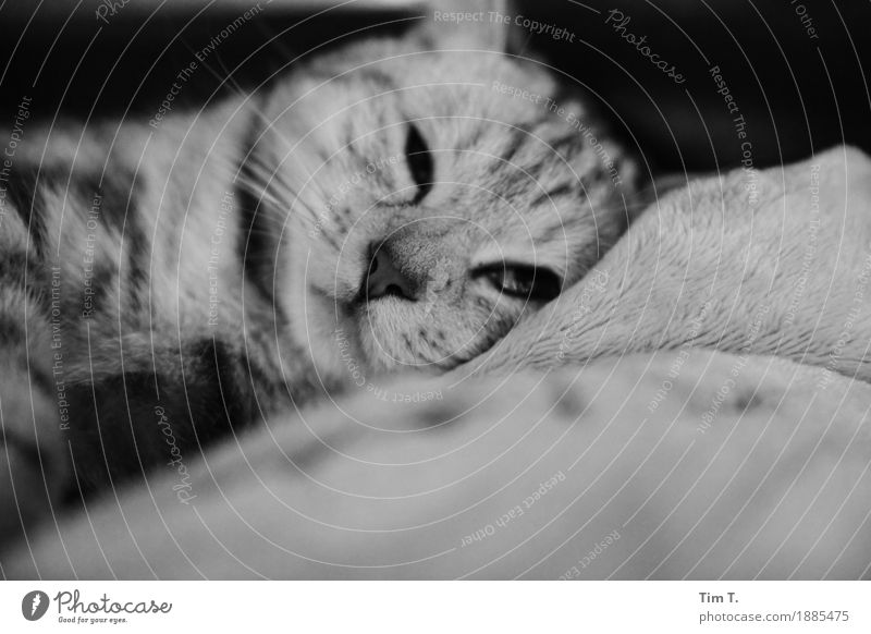 cat Animal Pet Cat 1 Baby animal Protection Stagnating Relaxation Black & white photo Interior shot Deserted Morning Blur Looking