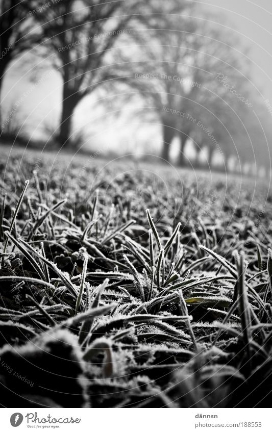 Fog in the morning II Nature Deserted Fear Bizarre Emotions Cold Forest Ice Frost Lanes & trails Winter Earth Field Light Shadow Black & white photo