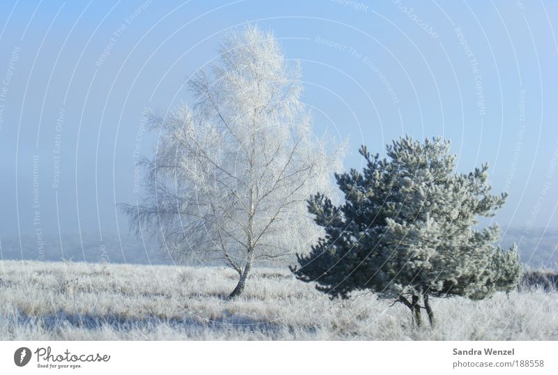 winter idyll Vacation & Travel Winter Snow Winter vacation Environment Nature Plant Cloudless sky Weather Beautiful weather Ice Frost Tree Field