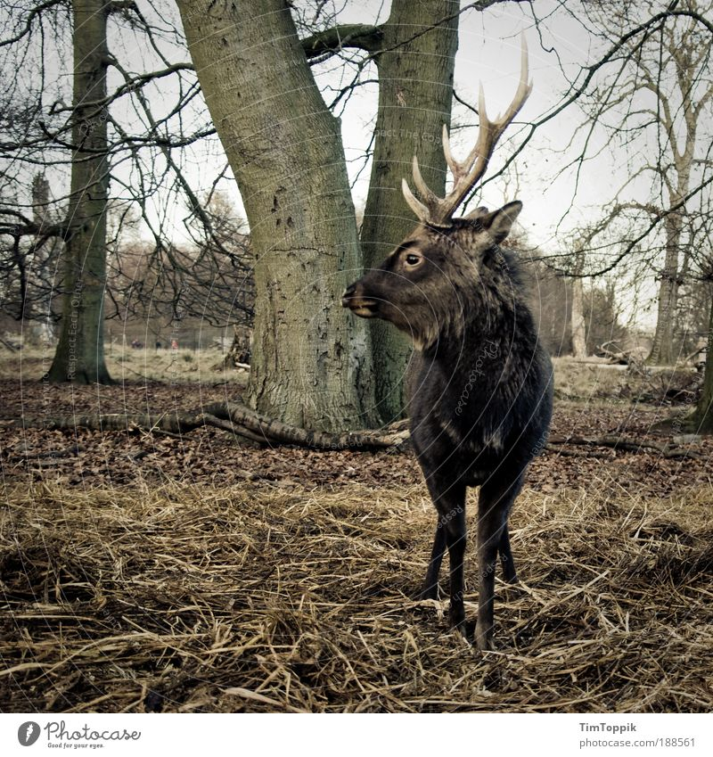 Tree Animal Forest Masculine Animal face Zoo Wild animal Hunting Antlers Pride Deer Superior Roe deer Leader District Game park