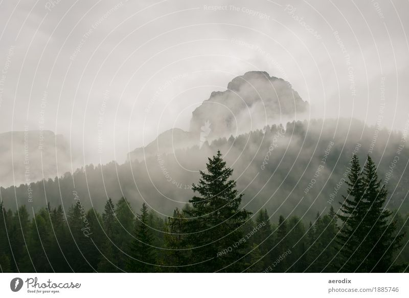 Mountain peaks in fog with firs in the foreground Nature Landscape Elements Fog Tree Forest Dolomites Peak Authentic Gray Green Mountaineering Hiking