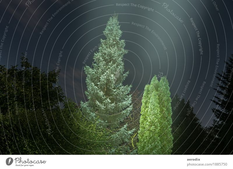 shining trees in full moon light Nature Night sky Full  moon Tree Forest Dark Green Black Long exposure Illuminate Background picture Mystic Fir tree Lighting