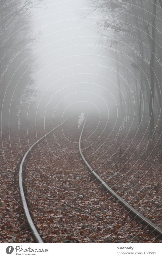 Winter Forest Autumn Landscape Fog Railroad Railroad tracks Train travel Rail transport