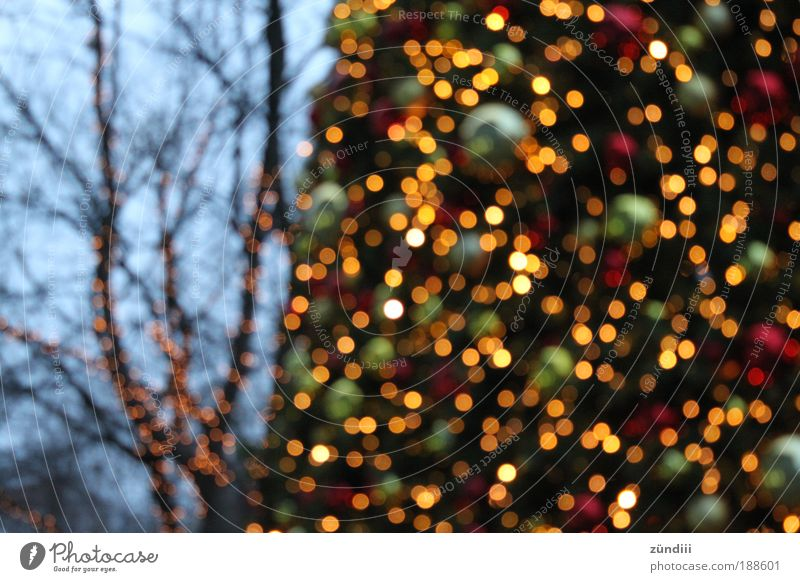 it´s christmas Christmas tree Glittering Beautiful Multicoloured Yellow Gold Green Red Curiosity Moody Desire Christmas mood Colour photo Exterior shot Deserted