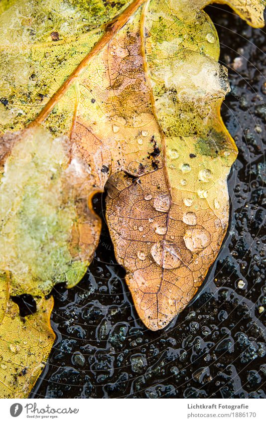 Nature Beautiful Water Leaf Calm Winter Black Yellow Natural Snow Brown Weather Ice Fresh Gold Perspective